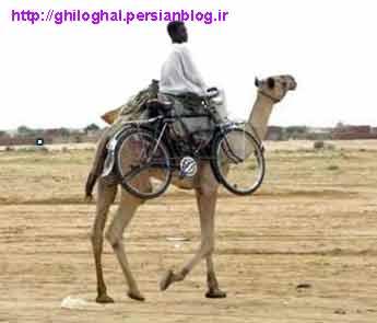 عکس عرب شتر دوچرخه سوار !!!